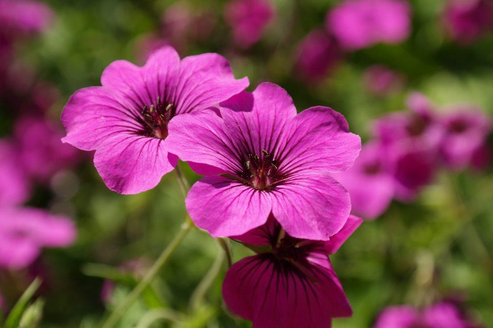 bloom-blossom-flora-68646