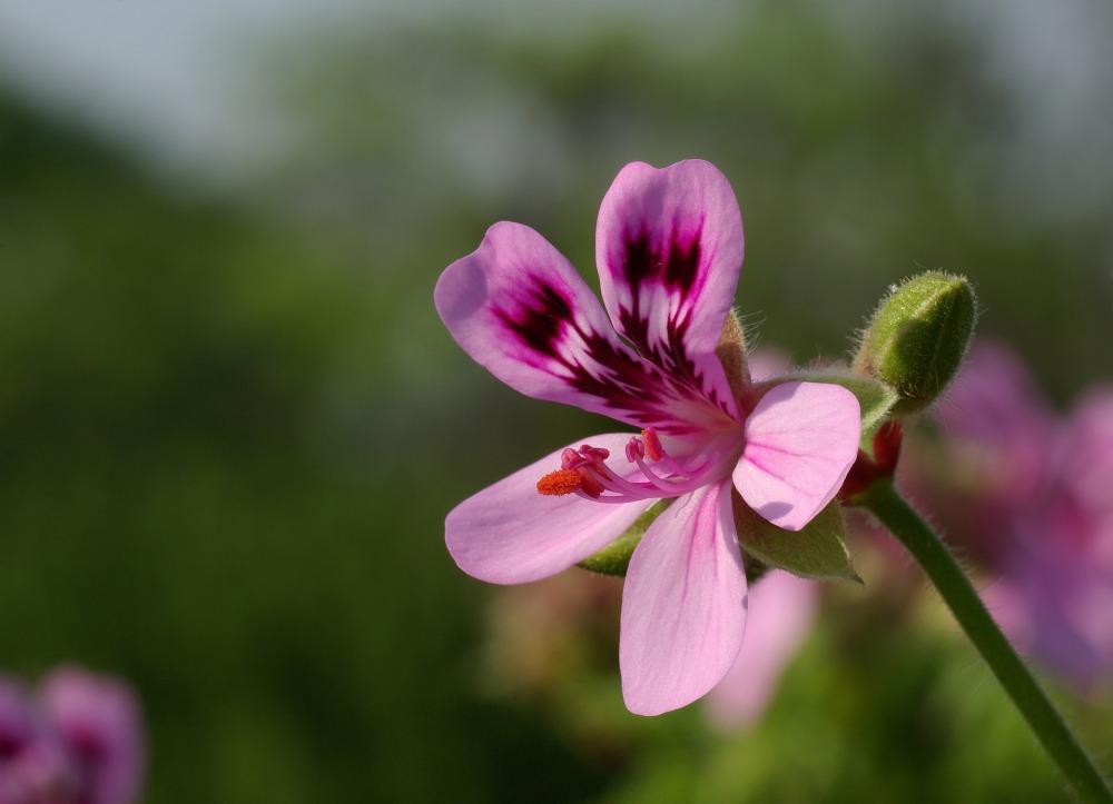 flower-1085998_1920